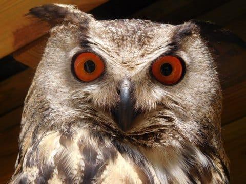 hamish stare (1)